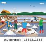 agriculturist work in saline... | Shutterstock .eps vector #1556311565