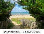 pathway to wild beach of... | Shutterstock . vector #1556906408