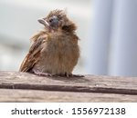 newly hatched baby cardinal...