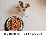 Cute Small Jack Russell Dog At...