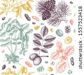 vector nuts seamless pattern.... | Shutterstock .eps vector #1557523418