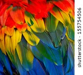 scarlet macaw feathers ... | Shutterstock . vector #155754506