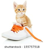 Cute Little Red Kitten In Shoe...