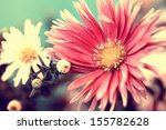 Photo Of Delicate Red Aster