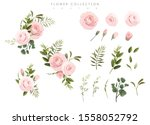 flower collection. roses and... | Shutterstock .eps vector #1558052792