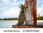 Pineapple On A Beach Background