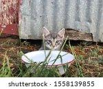 Feral Kittens Found In Barn 2019