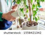 Woman's Hands Watering Plants...