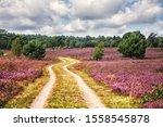 Path Through L Neburg Heath ...