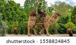 Camel rider at atlanta...