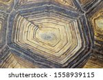 Stock photo blurred pattern of tortoise shell cropped shot of tortoise shell blurred abstract nature 1558939115