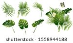 set of branches of tropical... | Shutterstock .eps vector #1558944188
