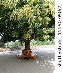 Circular Wooden Tree Bench...