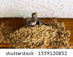 Group Of Chicks Of Swallows ...