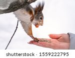 Girl Feeds A Squirrel With Nut...
