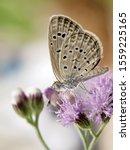 Beautiful Butterfly On Flower...