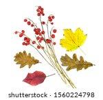 Autumn composition. dry bright...