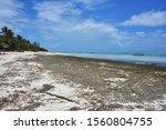 Seaweed Covered Paje Beach...