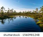 Spring Landscape In The Swamp.  ...