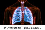 Human Respiratory System Lungs...