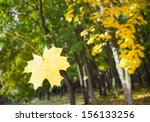 Autumn leaf falls from the tree - stock photo