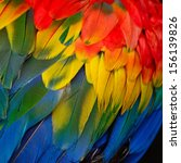 multicolored feathers  scarlet... | Shutterstock . vector #156139826