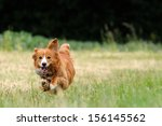 Stock photo running dog 156145562