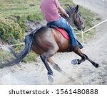 Equestrian Facility. Professional Female Rider on His Horse. - stock photo