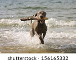 Happy Young Dog Having Fun In...