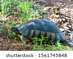Stock photo marginated tortoise is the largest european tortoise in the park of athens greece 1561745848
