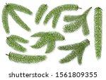 set of spruce christmas... | Shutterstock .eps vector #1561809355