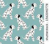 Dalmatian. Blue Background....