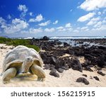 Stock photo large turtle megalochelys gigantea at the sea edge on background of a tropical landscape 156215915