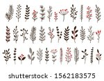 hand drawn winter leaves and... | Shutterstock .eps vector #1562183575