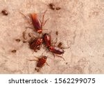 Cockroaches under the floor....