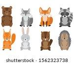 vector set of cute forest...   Shutterstock .eps vector #1562323738