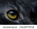 The Cat Eyes That Are...