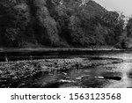 The Eden River Along Cumbria