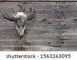 Buffalo Head Bone Hanging On...