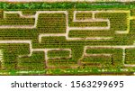 Aerial View On Corn Maze. Corn...
