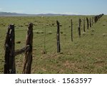 Antelope In A Field With A Fence