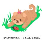 cute puppy playing with ladybug ... | Shutterstock .eps vector #1563715582