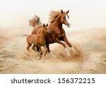 Purebred White Arabian Horse I...