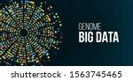 dna test  genomic big data... | Shutterstock .eps vector #1563745465