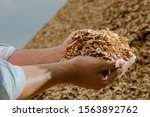 Hands Holding Wooden Chips From ...