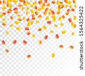 maple leaves vector  autumn... | Shutterstock .eps vector #1564325422