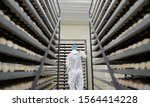 Small photo of egg plant factory poultry farm stack hatchery
