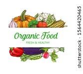vegetables  healthy food ... | Shutterstock .eps vector #1564420465