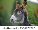 Portrait Of A Donkey Donkey Head