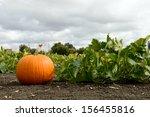 Pumpkins In Pumpkin Patch Read...